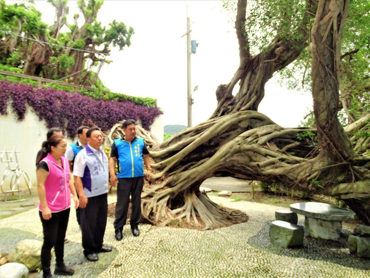 員林市長游振雄(左2)與市民代表前往廣天宮會勘,商討如何移除傾倒老樹,以免信徒受...