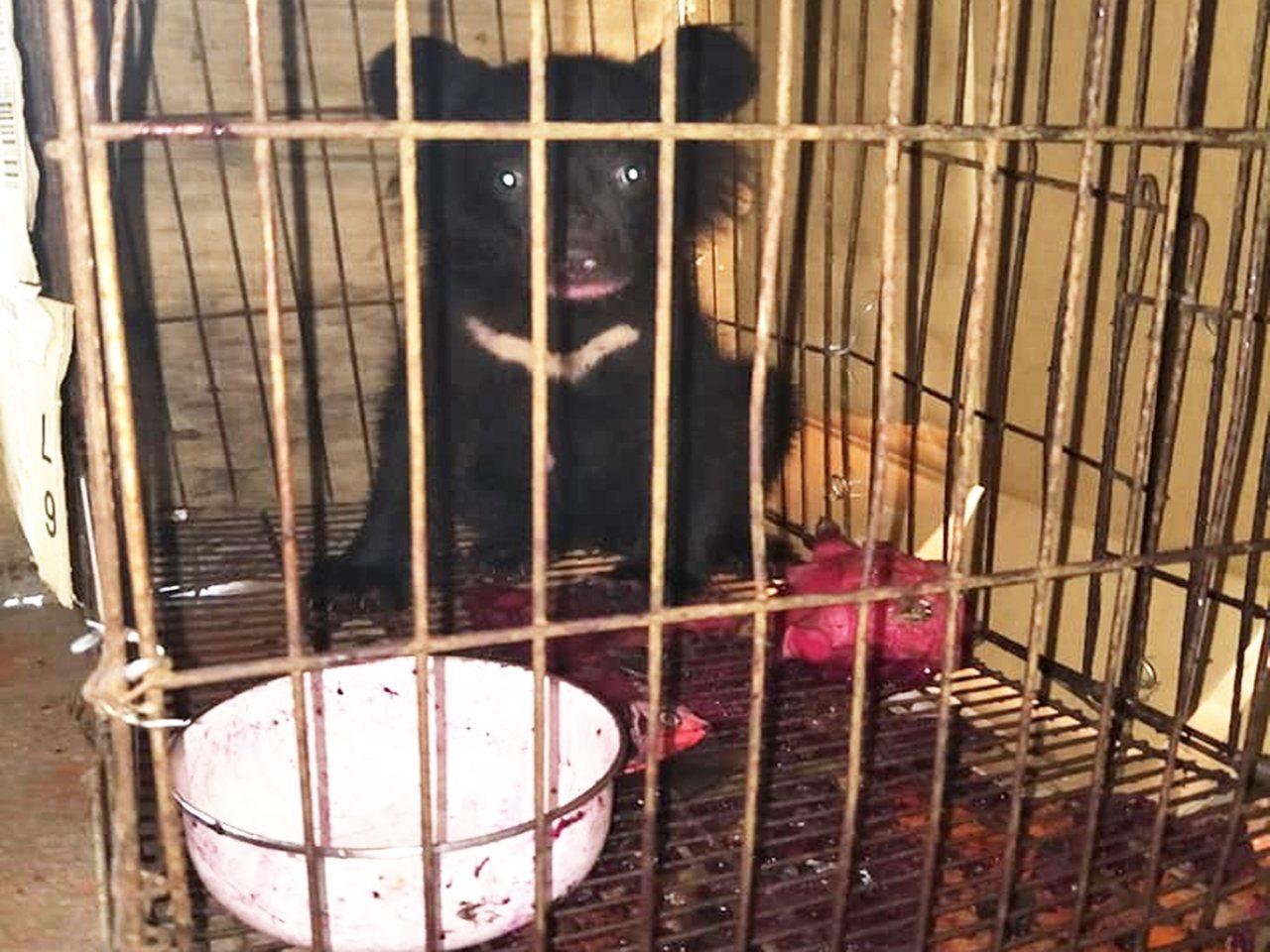 保育人員說, 廣原小熊7月27日獲救,8月10日測量已長胖1公斤,目前更胖了,就...
