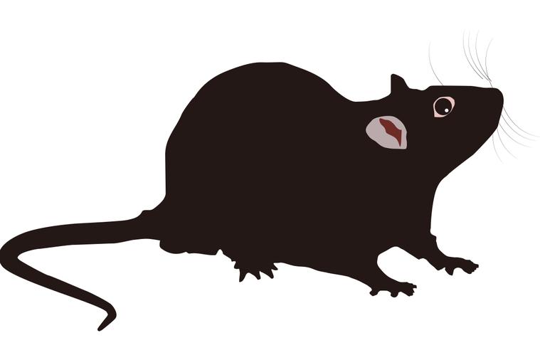 老鼠示意圖/ingimage