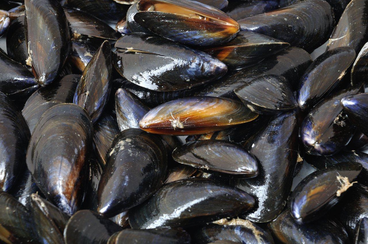海鮮愛好者對淡菜獨特腥味和多汁口感讚不絕口,但研究發現,淡菜也是海中的超級吸塵器...