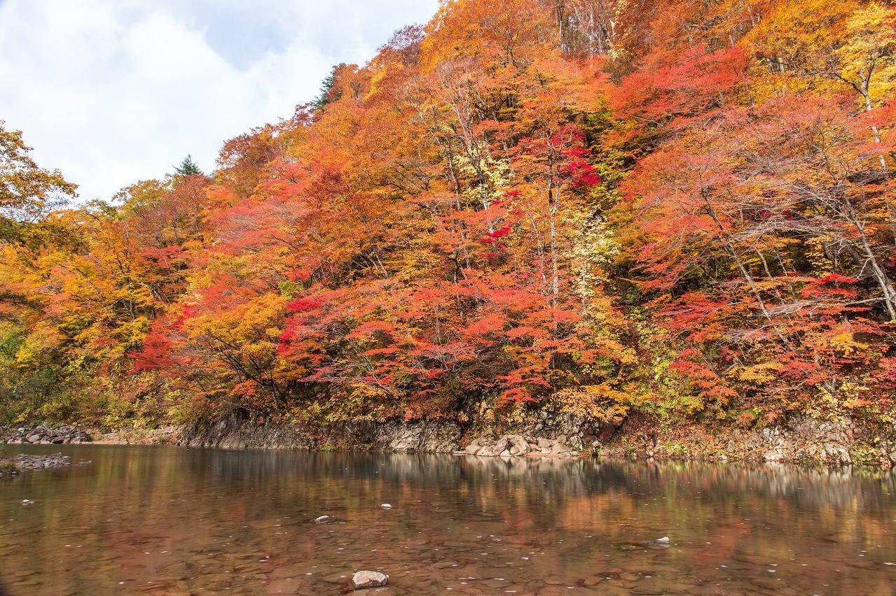 被櫸樹的原生林所環繞的「葛根田溪谷」,可以欣賞清幽的紅葉美景。圖/日本王子大飯店...