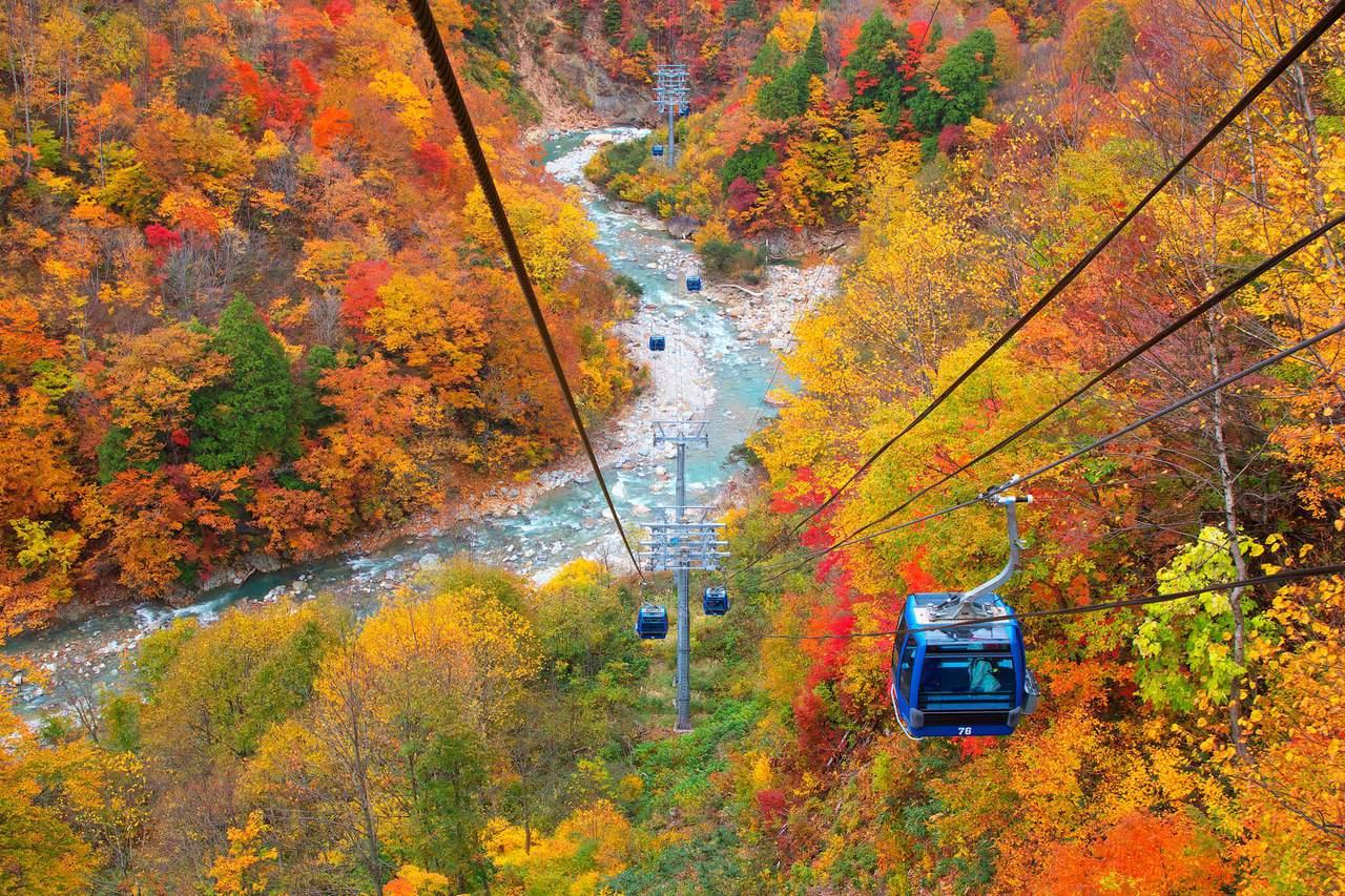 旅客搭乘苗場龍纜空中纜車的途中,可欣賞週邊的滿山楓紅。圖/日本王子大飯店提供