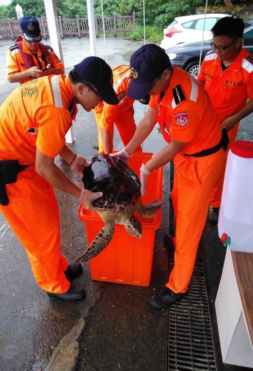 台南海巡人員將擱淺綠蠵龜救上岸。記者黃宣翰/翻攝