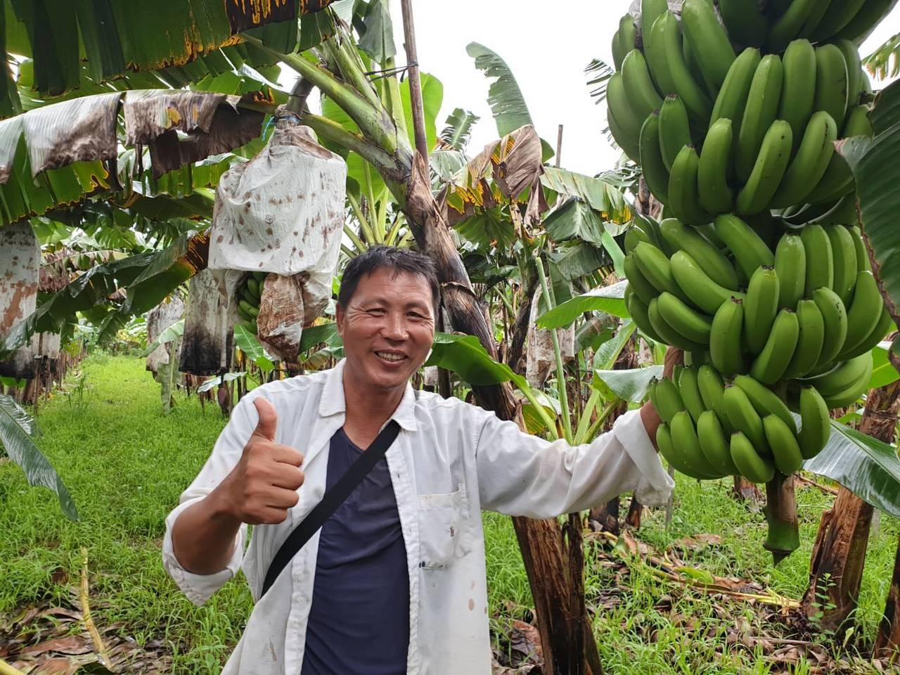 萬巒農友簡良智,原在石化業擔任工程師擁有百萬年薪,但3年前辭職返鄉務農,10公頃...