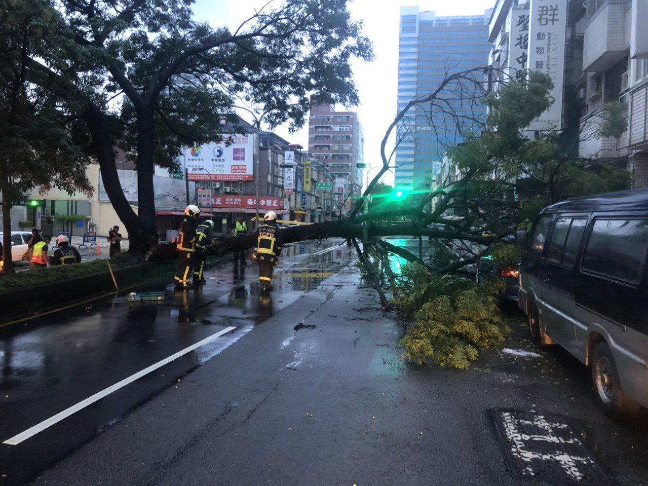 台中市西屯區福雅路的路樹今天凌晨4時許倒塌,砸到兩輛停在路旁的轎車。圖/讀者提供