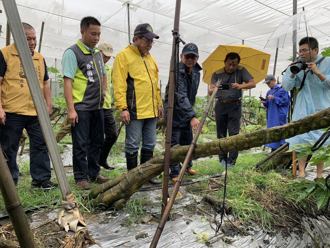農民陳榮隆(左四)向縣長潘孟安說明木瓜園浸水多日,產量已嚴重受到影響。記者翁禎霞...