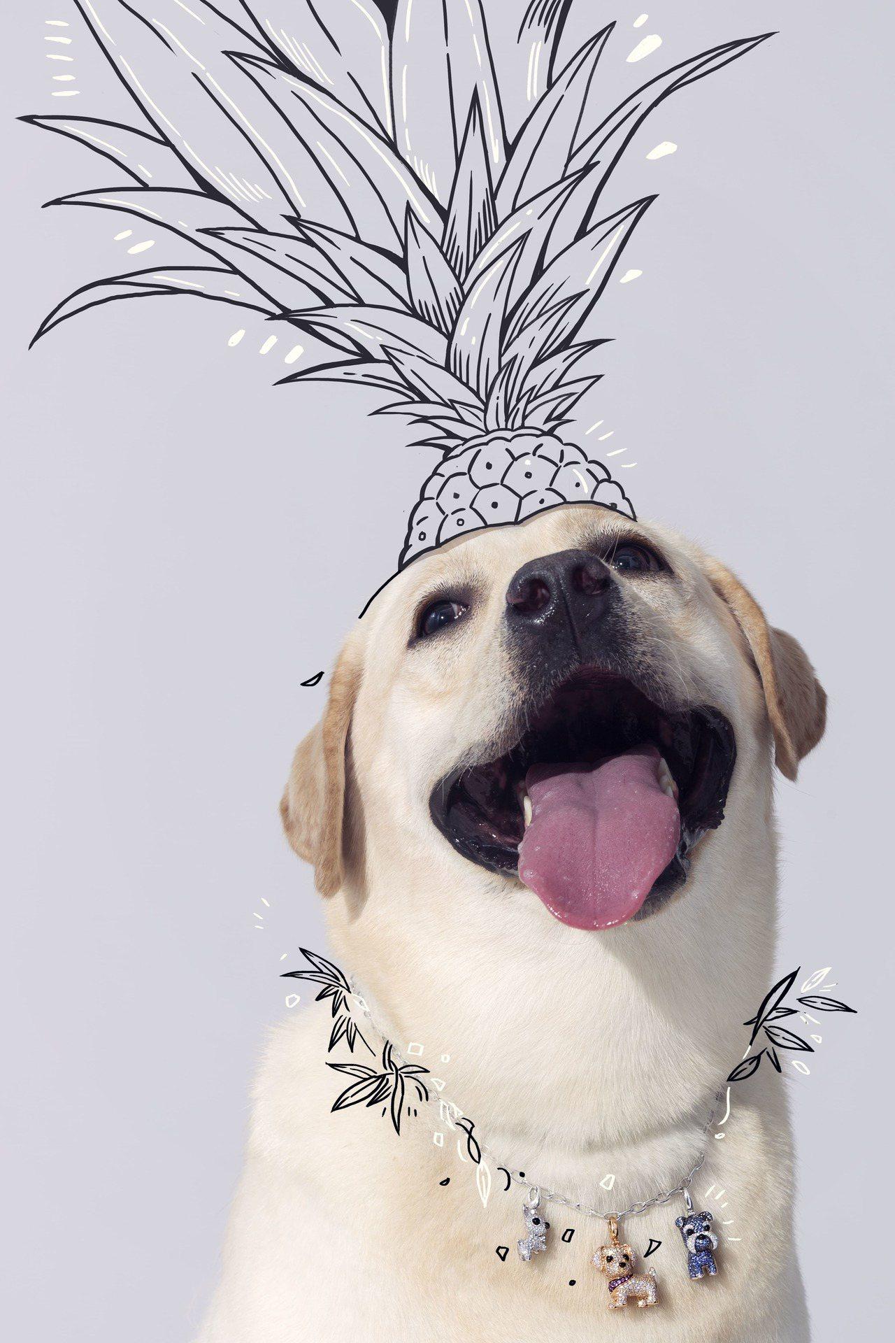 Qeelin的Wang Wang系列以小狗為設計靈感,家族成員已有10個可愛犬種...