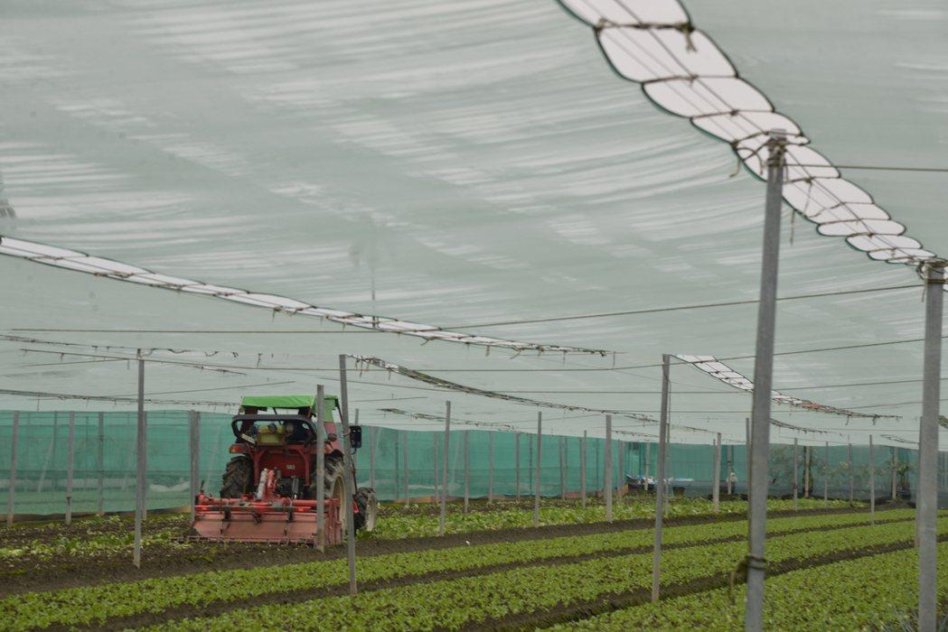連日豪雨不斷,雲林西螺、二崙等鄉鎮蔬菜受損嚴重。記者李京昇/攝影