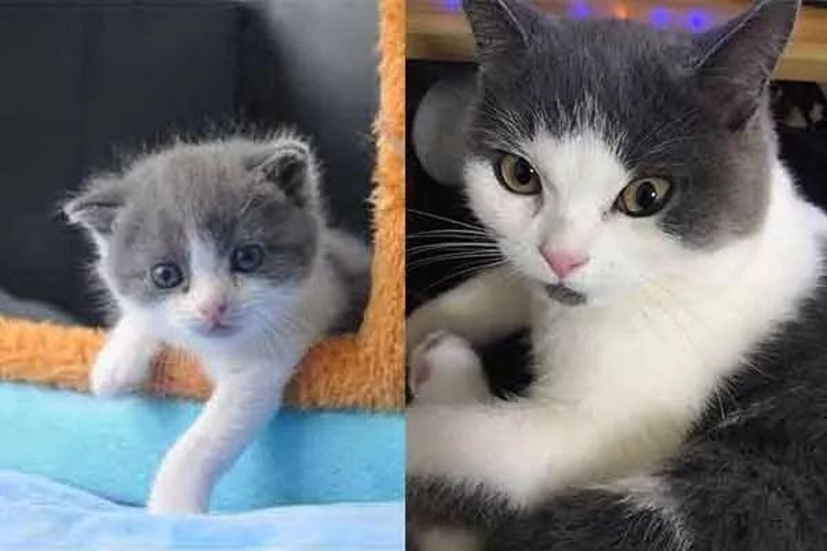 左為複製貓大蒜,右為已故被複製的貓。圖/科技日報