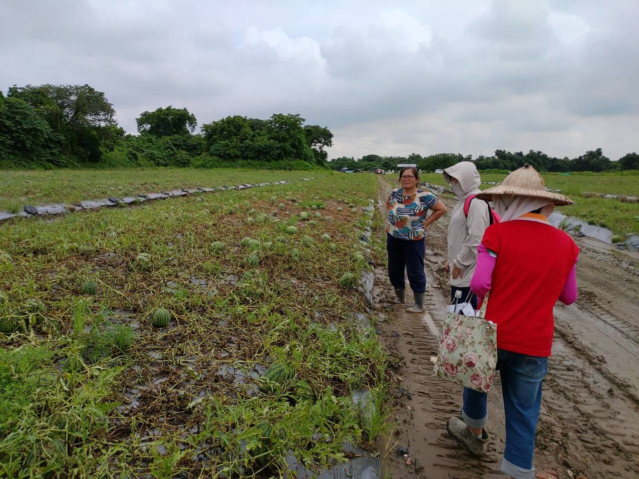 農委會公告南市為辦理0812豪雨農業天然災害現金救助區域,21日至30日受理申請...