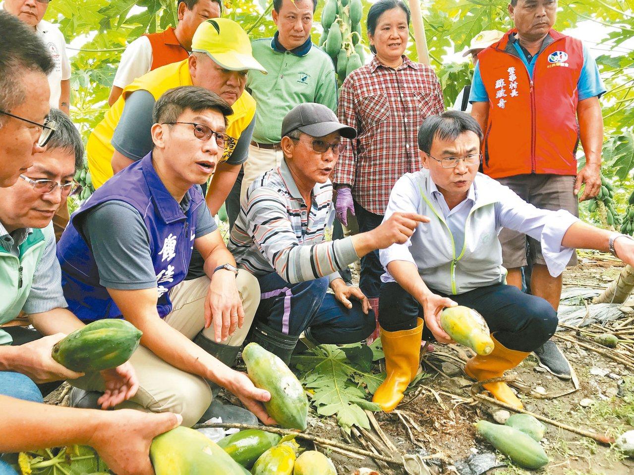 農委會主委陳吉仲(前排右)昨到屏東視察農損,宣布木瓜等8種作物適用申請現金補助。...