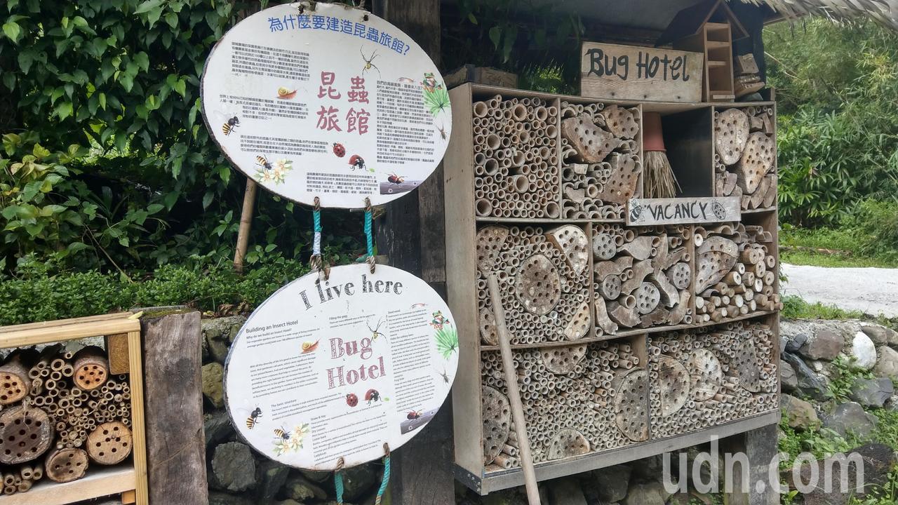 頭城休閒農場推循環農業示範 讓蜜蜂住高級旅館