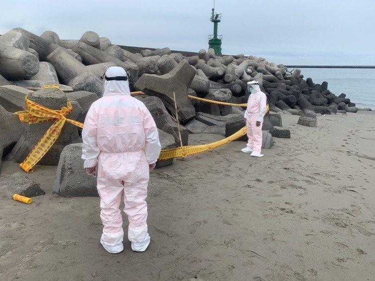 台中海灘今天被發現疑似死豬,防疫人員檢查確認是死狗。圖/海巡署提供