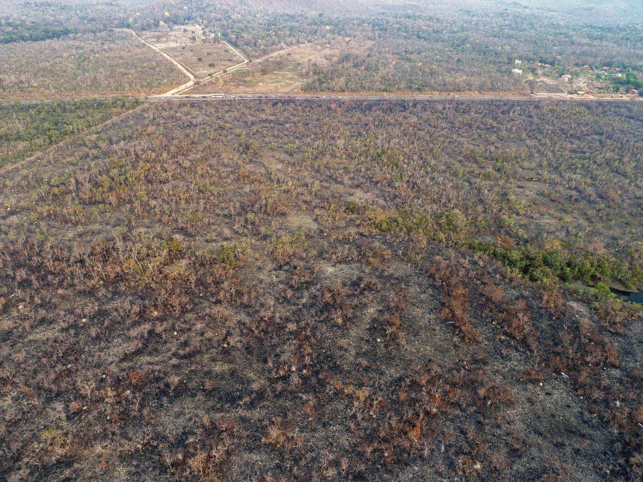 近日亞馬遜雨林爆發嚴重大火,帶動減碳議題。 歐新社