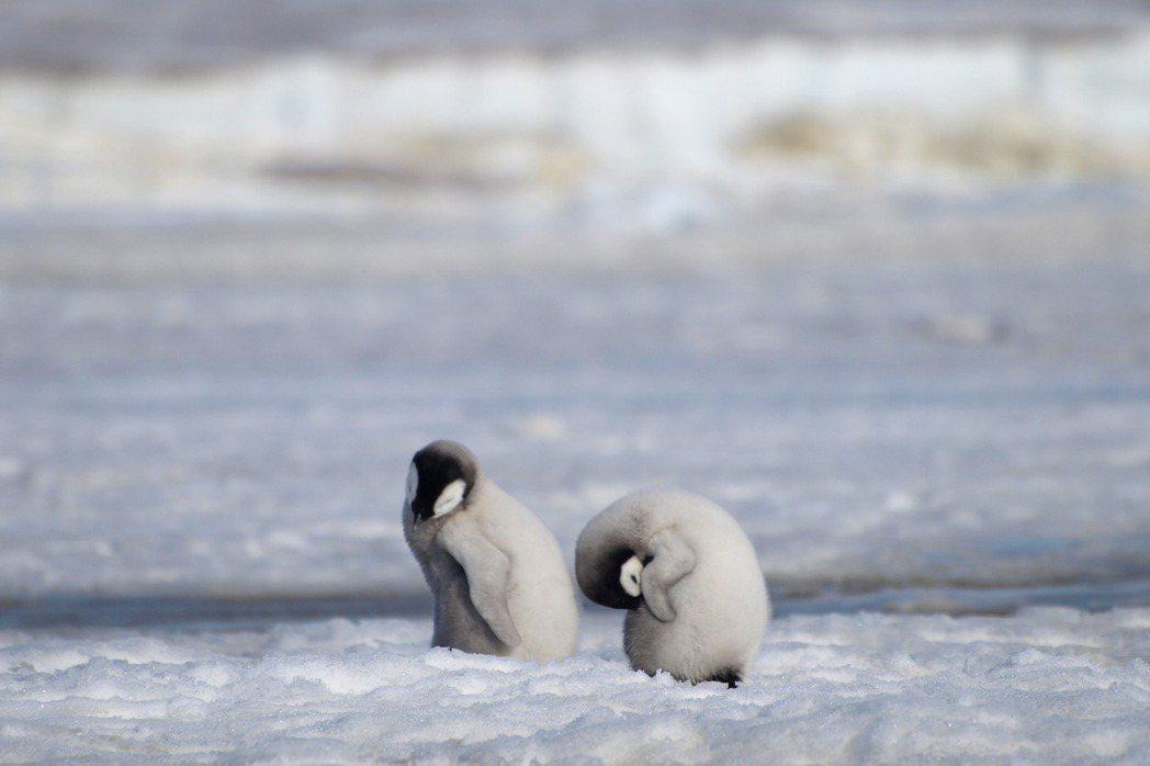 攝於2010年,南極。 圖/美聯社