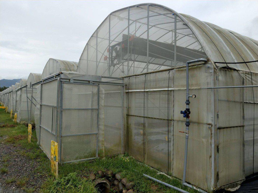 高雄市農業局提醒農友留意,加強設施固定、作好田間排水及雨後疫病防治,以減輕損失。...