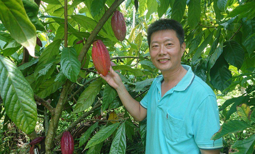 高祥恩成功讓檳榔園改種可可樹。記者卜敏正/攝影