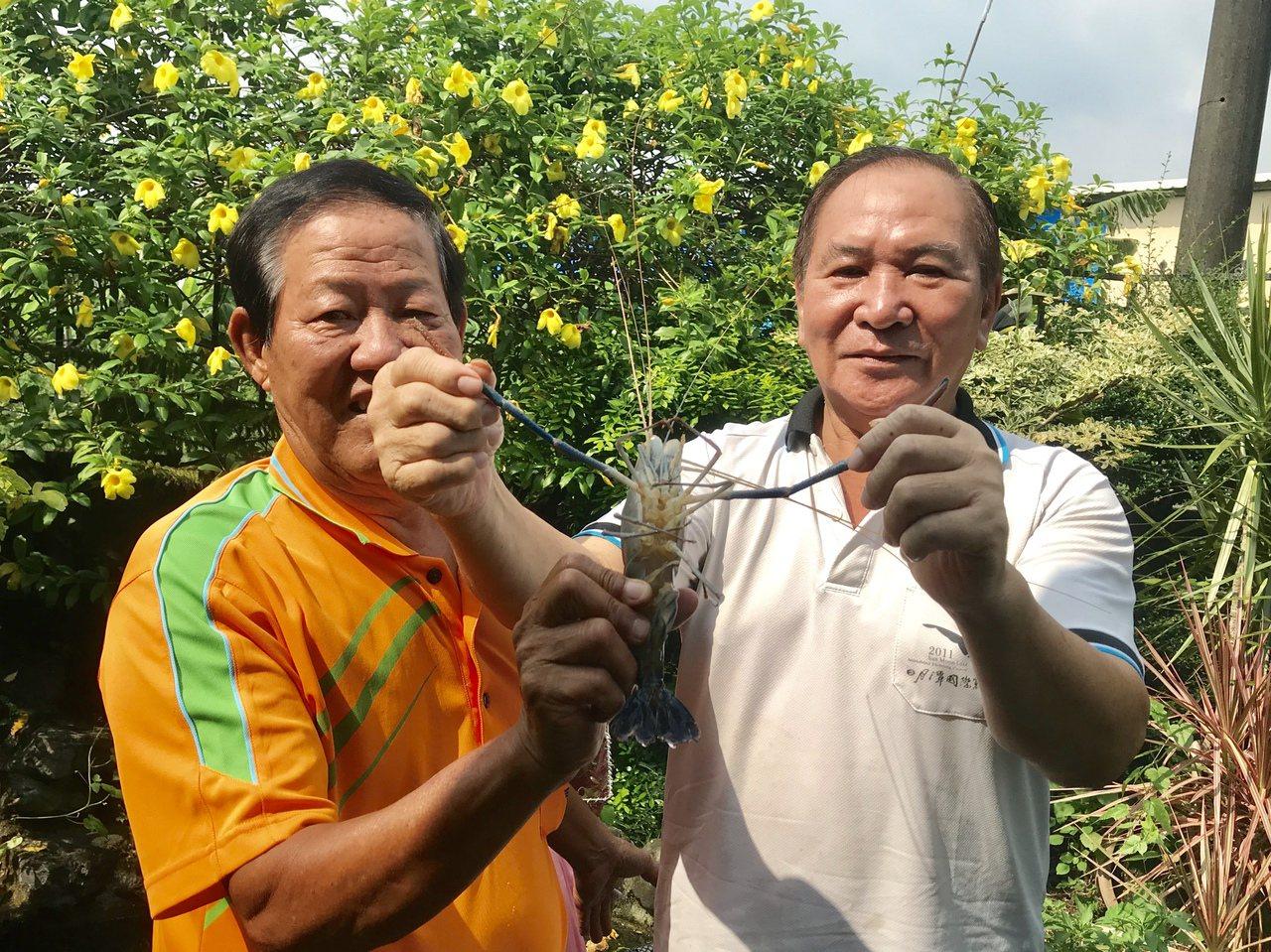全台泰國蝦產量最多非屏東莫屬,每10隻泰國蝦就有8隻來自屏東,為將泰國蝦塑造成潮...