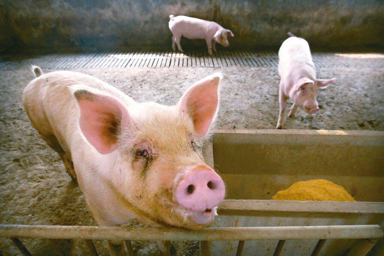 中共國家統計局公布七月國民經濟運行情況,指出居民月消費價格轉漲,其中豬肉受非洲豬...