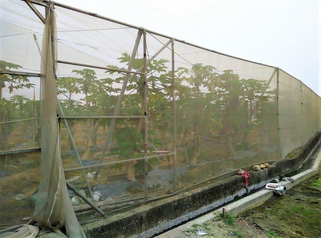 白鹿颱風即將來襲,農糧署呼籲農友的棚架網室等設施如有破損應及早維修。圖/農糧署提...