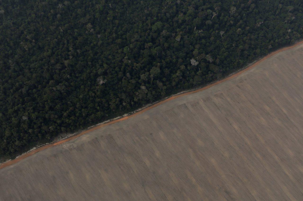 巴西亞馬遜熱帶雨林,一條產業道路隔著兩個截然不同的世界;一邊是蒼鬱茂密的樹林,另...