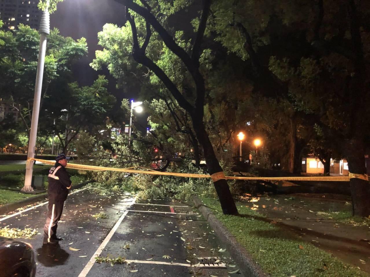 高雄市新興區路樹遭強風吹倒倒,員警在場警戒。記者林保光/翻攝
