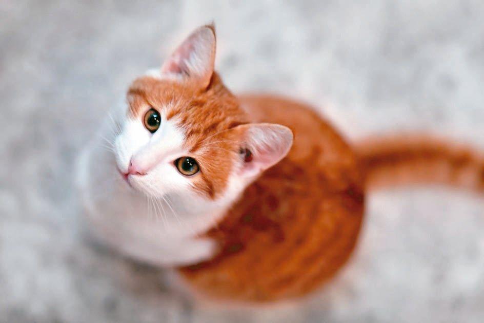 居家險可附加「寵物意外費用補償附加條款」,毛小孩如果意外受傷需要治療,就可獲得費...