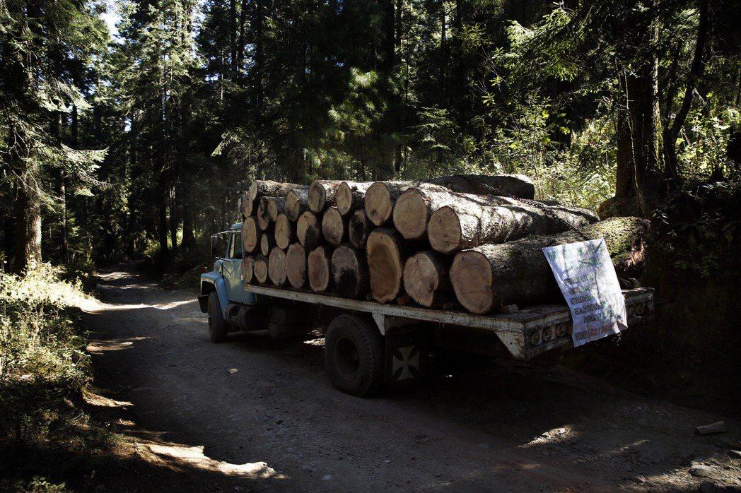 澳洲墨爾本因伐木每年流失25萬人用水量 。美聯社