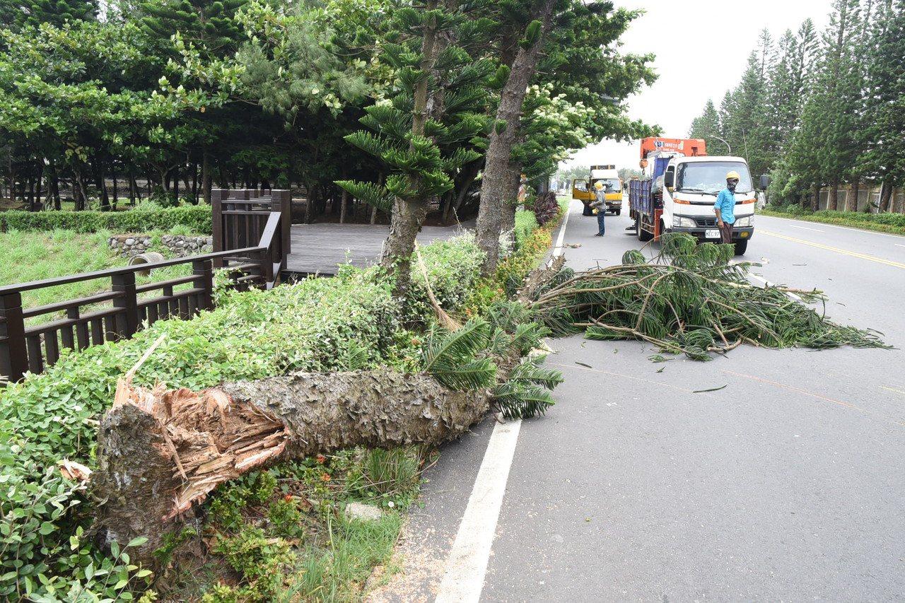 澎湖204縣道有路樹倒塌。圖/澎湖縣政府提供
