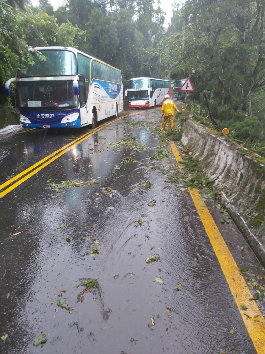 台14甲線清境國小前路樹被強風吹斷,一度導致雙向交通受阻。圖/仁愛鄉公所提供
