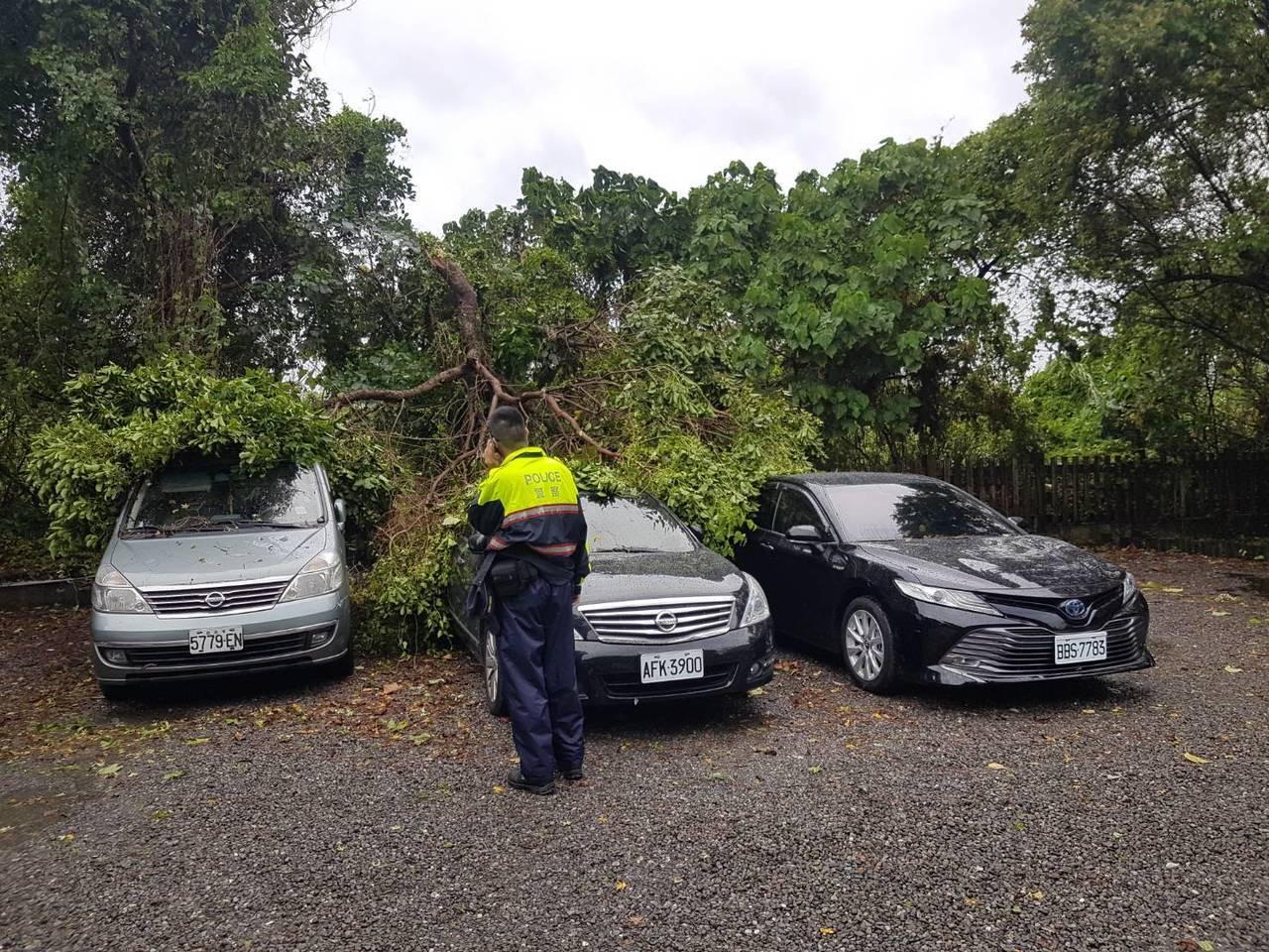 羅東鎮林業文化園區內停車場路樹倒下,壓到停在停車場內的車輛,羅東分局公正派出所警...
