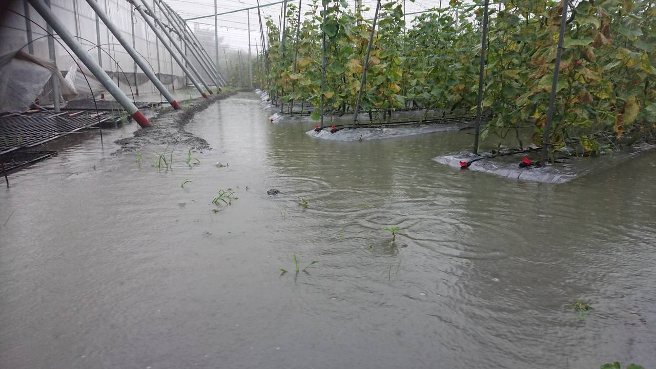 小黃瓜園淹水,須時間復耕。圖/林有信提供
