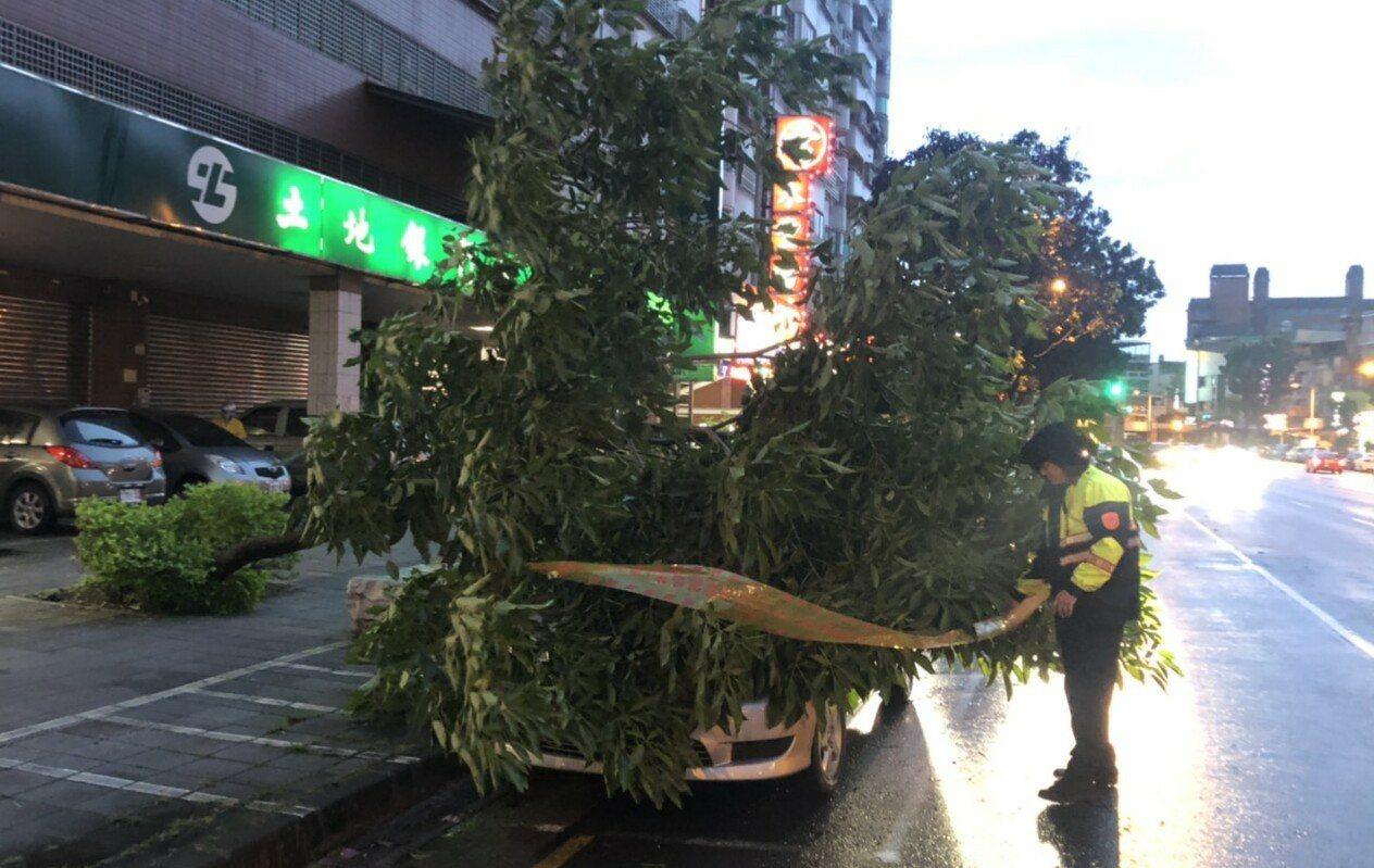 高雄市小港區今天傍晚路樹倒塌,壓中路邊的停車。記者林保光/翻攝