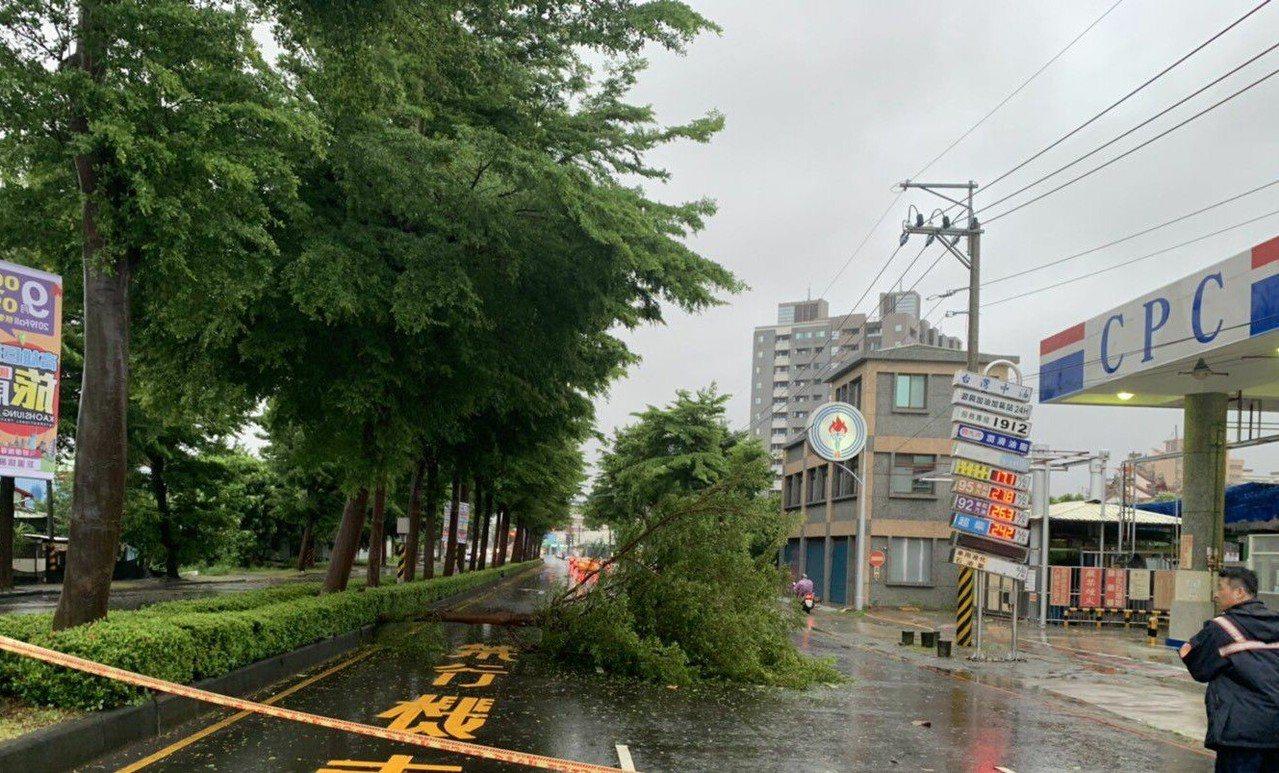 強風吹倒高雄市鳳山區路樹,影響交通,員警趕著排除路樹。記者林保光/翻攝