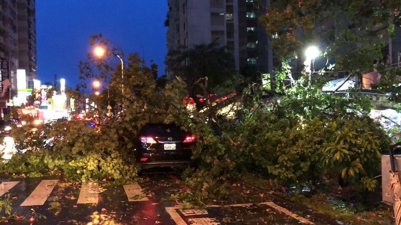 白鹿颱風襲台,台南傍晚颳起強陣風,南區大林國宅一株美人樹遭強風襲擊後攔腰折斷,損...
