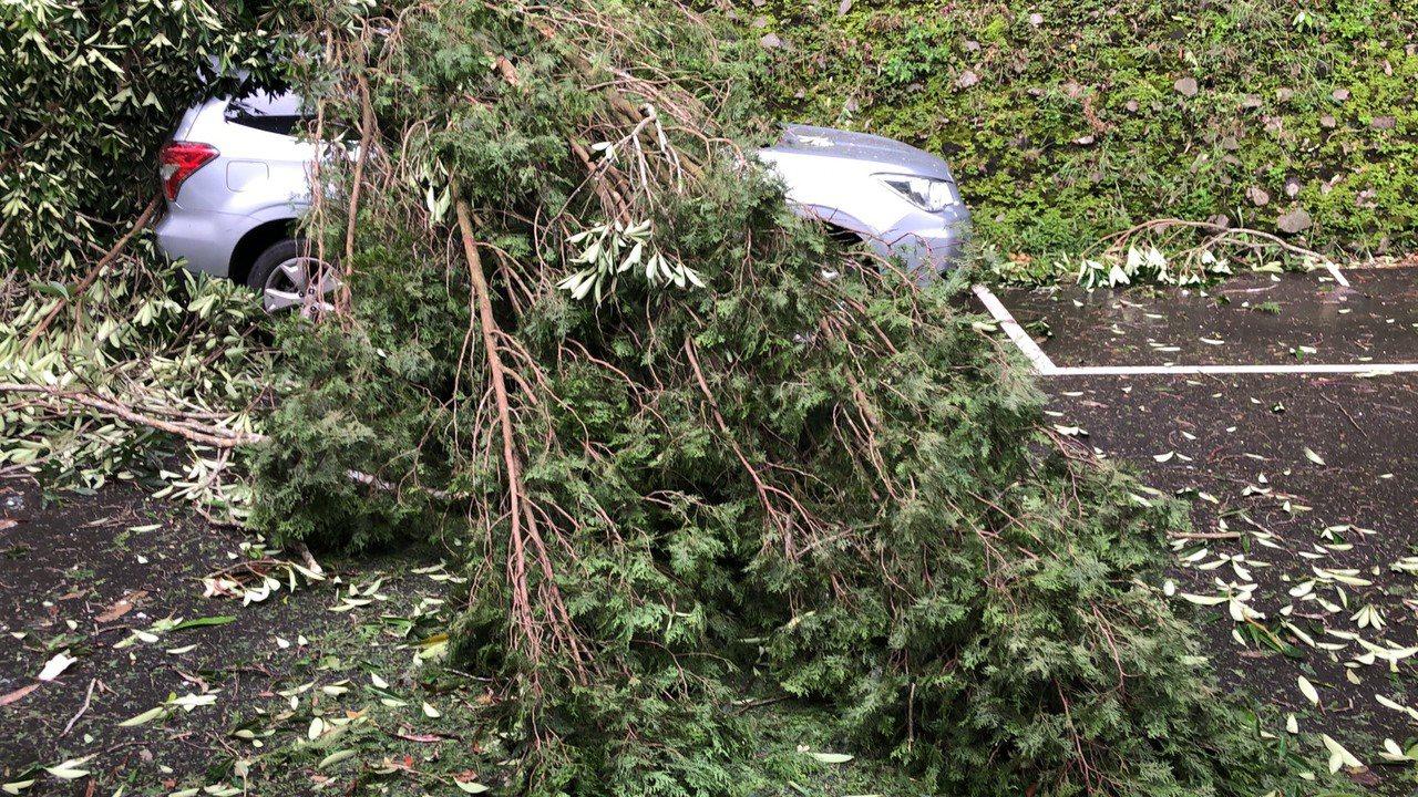 日月潭下午颳起11級強風,路樹倒塌壓中轎車。圖/讀者提供