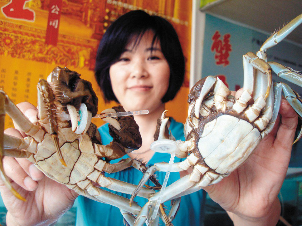 陽澄湖大閘蟹。(新華社資料照片)