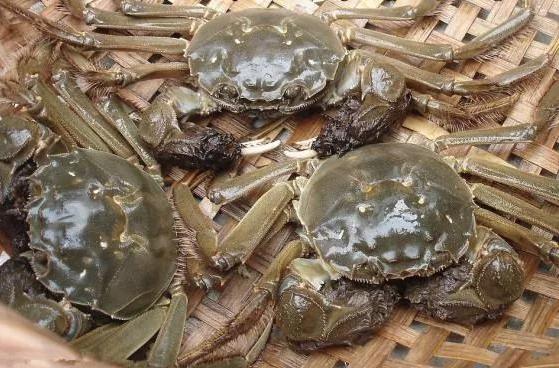 今年陽澄湖大閘蟹產量豐收,但價格不會回落。預計售價應在新台幣三千六百八十元左右。...