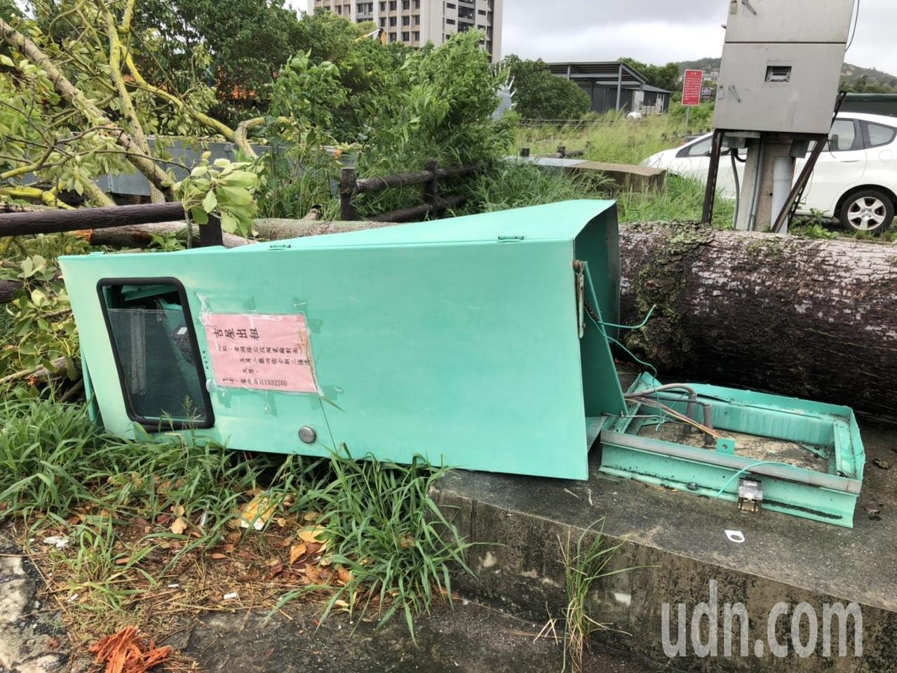 超大「木棉花樹」也被巨風吹倒,還把旁邊的電箱也壓垮了,不少路過的民眾都多看了幾眼...