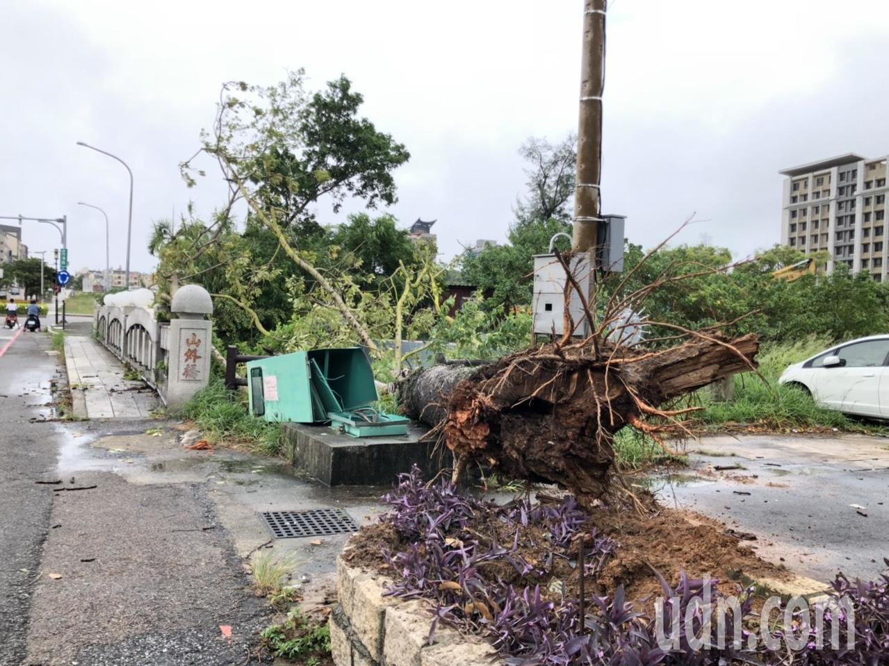 靠近武德新莊圓環山外橋的超大「木棉花樹」也被巨風吹倒,還把旁邊的電箱也壓垮了,好...