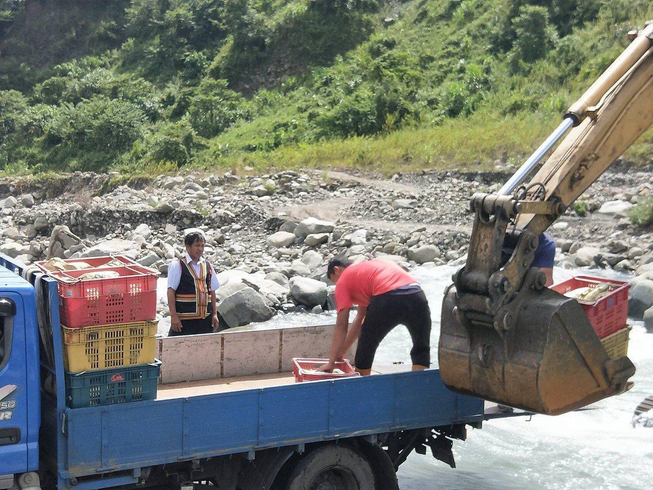 高雄市農業局和區公所協助利用怪手運送金煌芒果過溪。圖/高雄市農業局提供