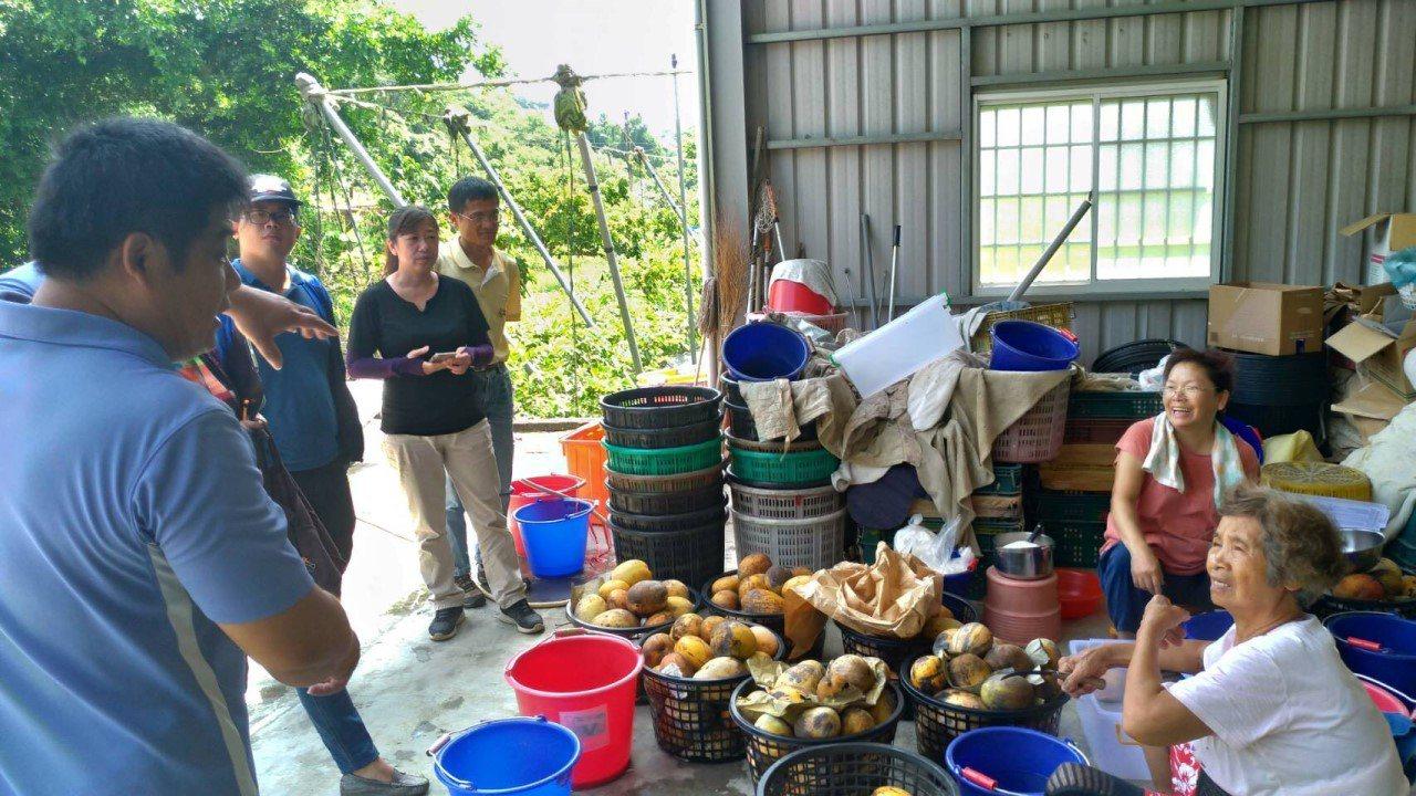 台南0812豪雨 新增絲瓜、凱特芒果列現金救助