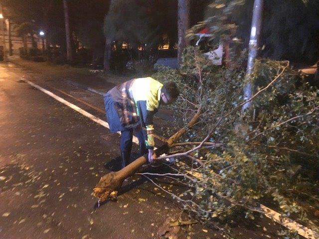員警協助清理阻礙交通的樹木殘枝。記者徐白櫻/翻攝