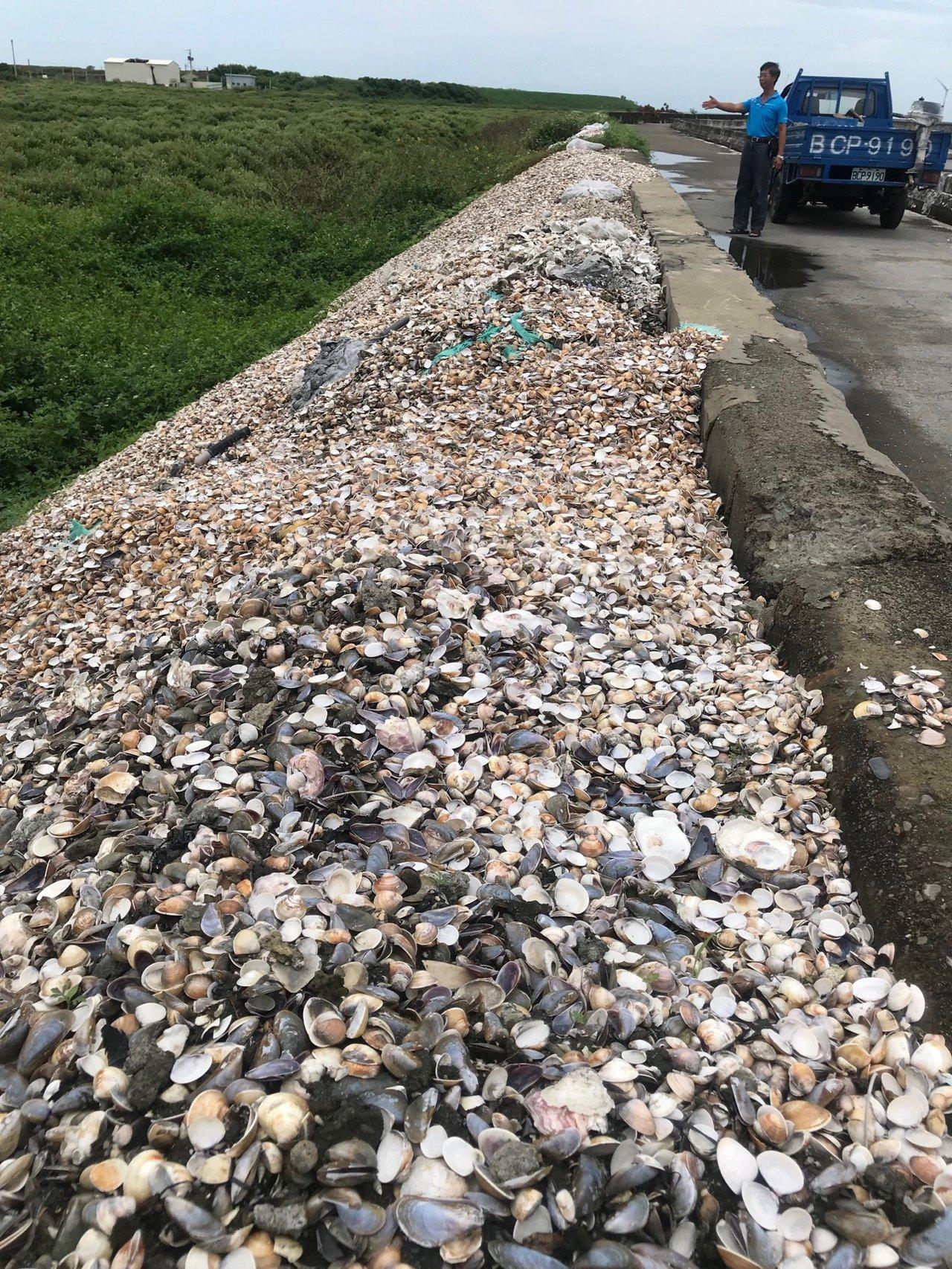 文蛤大量死亡,現在在堤岸邊愈來愈多文蛤殼到處亂倒,堆積如小山坡,文蛤農籲政府應該...