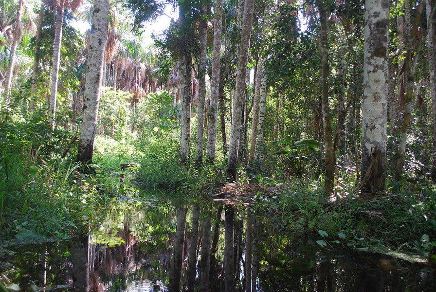 大火延燒愈來愈嚴重,美麗的亞馬遜雨林正逐漸毀滅。(photo by Flickr...