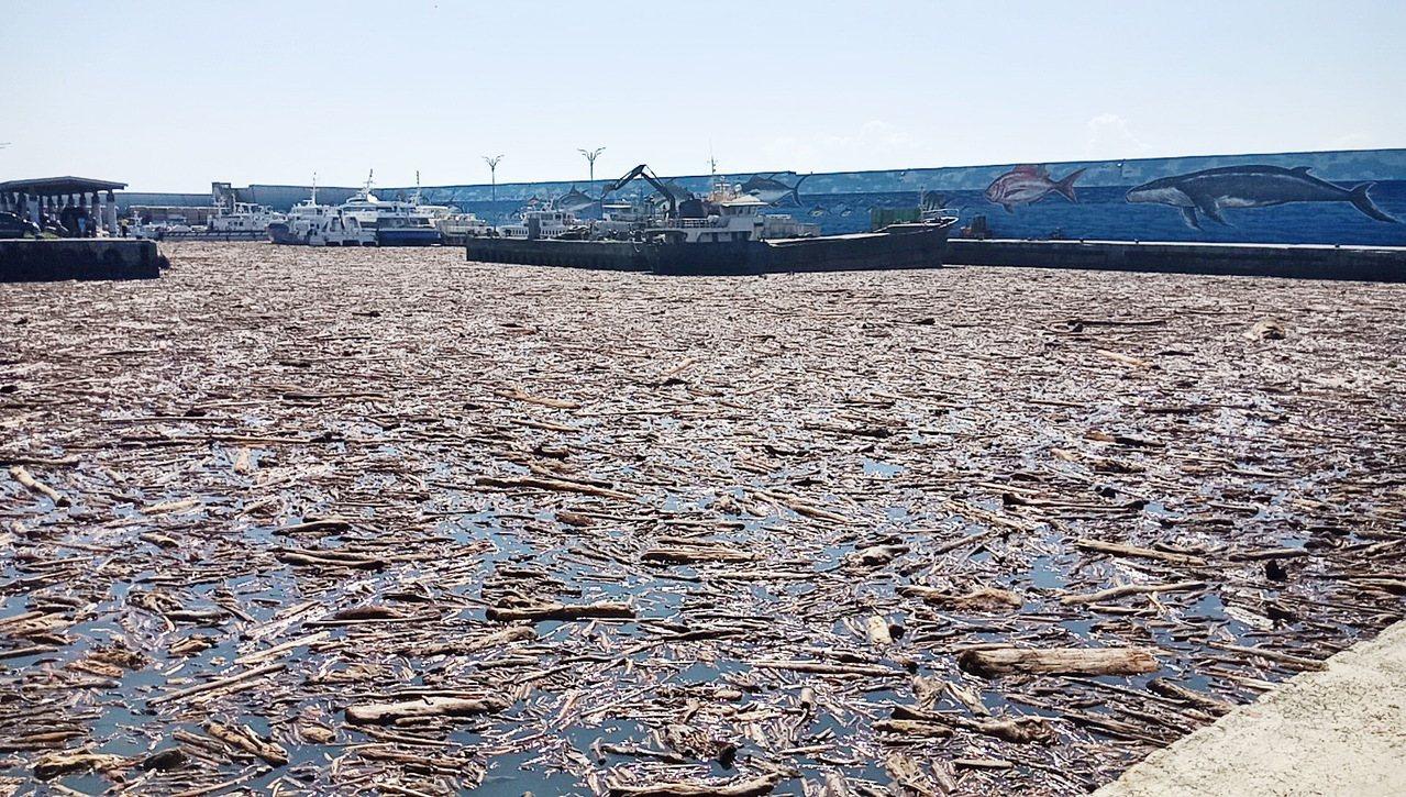 台東富岡漁港被大量漂流阻礙航道。記者羅紹平/攝影