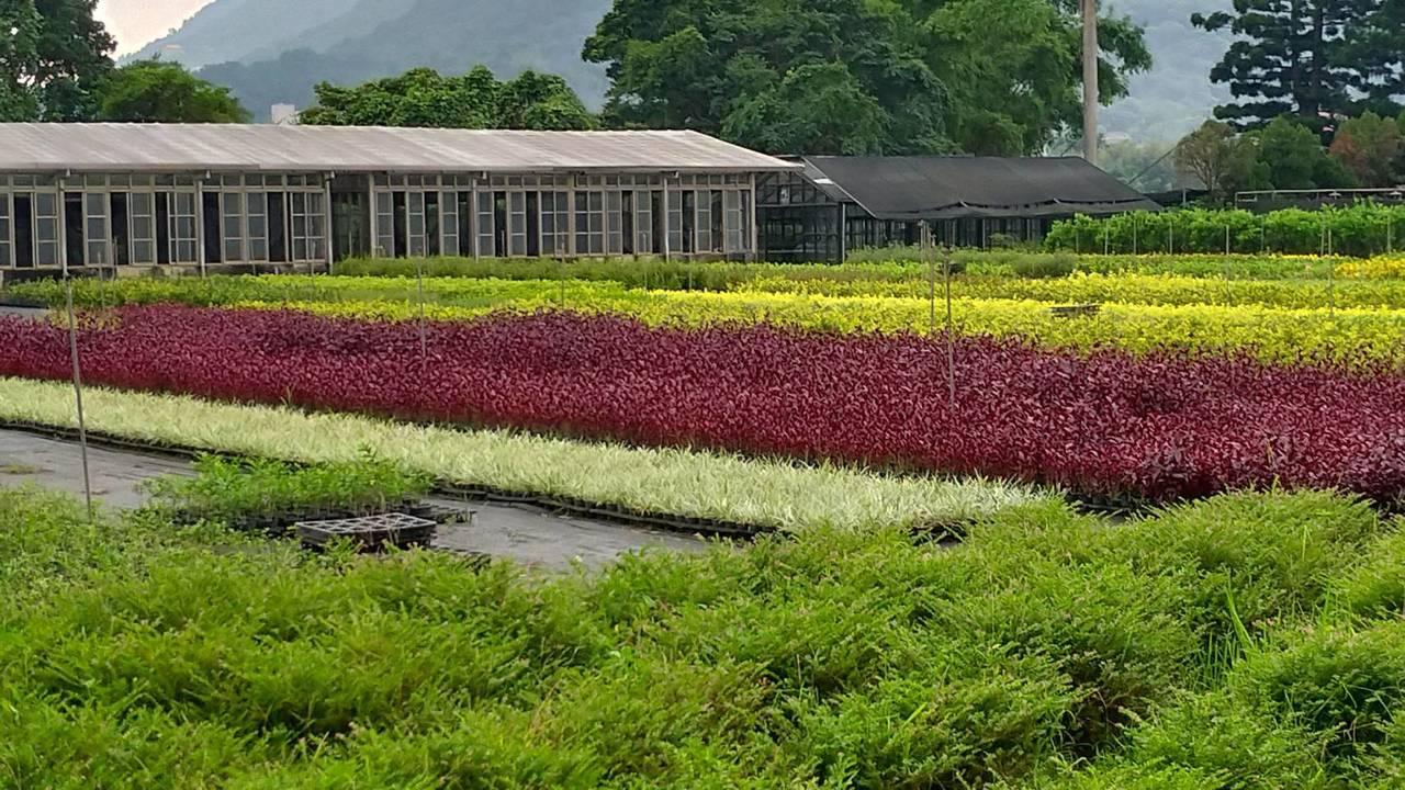 新北市府於「石碇小格頭苗圃」及「三峽大埔苗圃」2座直營苗圃,每年也提供免費綠美化...
