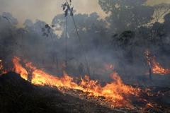 全球10%物種遭強烈威脅!亞馬遜雨林大火對動物傷害究竟有多大?