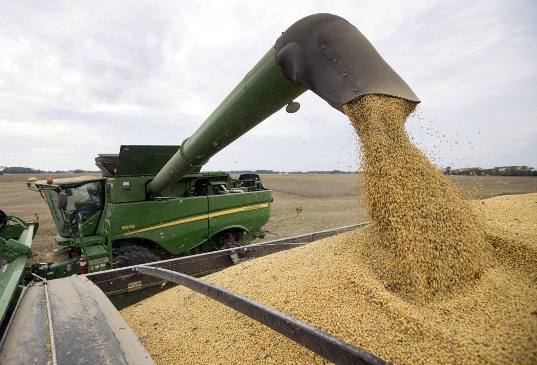 大豆是美中貿易戰的關鍵貨物。 (美聯社)