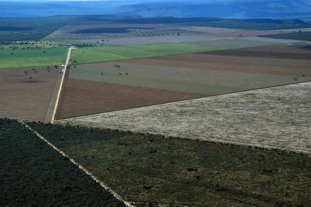 巴西巴伊亞州西部塞拉多旁的大片耕地。 (法新社)